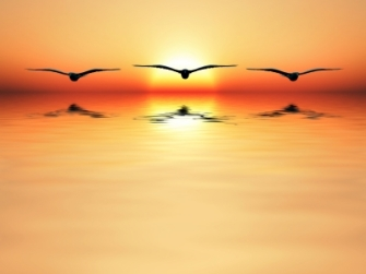 seaguls flying